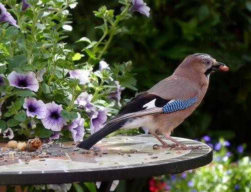 Gemeinsam Vögel zählen am Muttertagswochenende