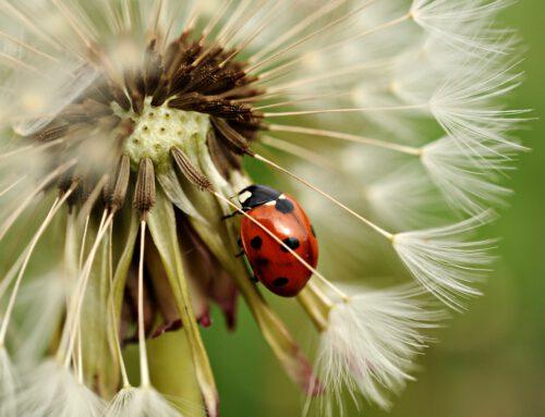 Mitmachaktion: Insektensommer – gemeinsam zählen, was zählt